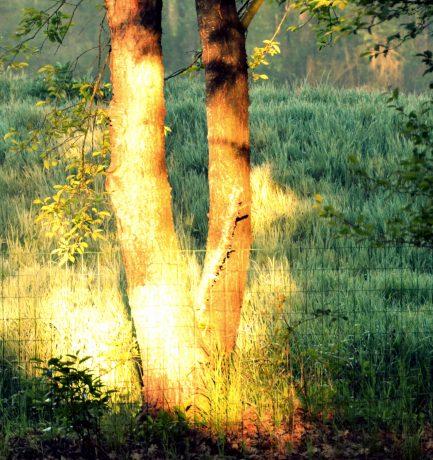 Licht erleuchtet einen Baum, geht das auch mit Menschengewächs?