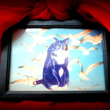 Komm an mein Herz, mein schönes Katzentier. Zieh ein der Tatze Krallen. Gönn einen Blick in deine Augen mir, Achatgesprenkelt und metallen.