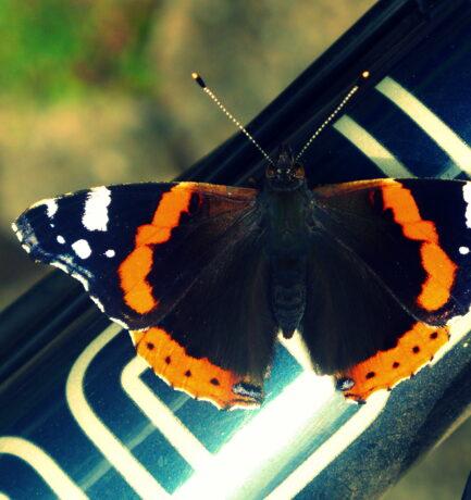 Die Raupe sagt: Es ist das Ende. Der Schmetterling sagt: Es ist der Anfang. (Autor unbekannt)