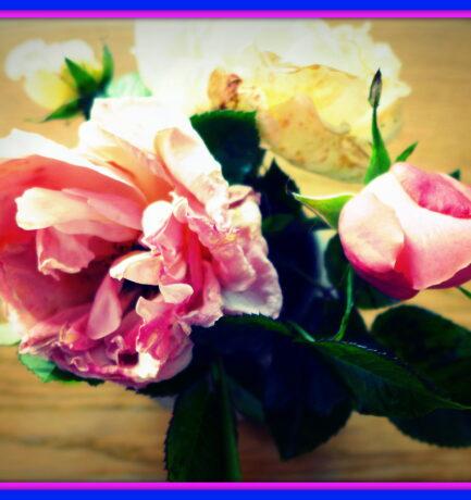 Historische Rosen blühen im November