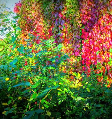 Wenn der Baum zu welken anfängt, tragen nicht alle seine Blätter die Farben des Morgenrots?